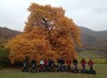 Herbst auf der Pfarrerwiesen am Hartberg