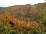 Herbst am Buchberg
