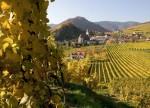Weinherbst in Spitz